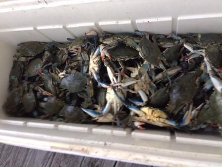 100 crabs