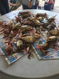 crabs 10 10-0