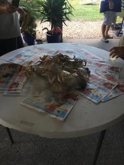 crabs 10-2