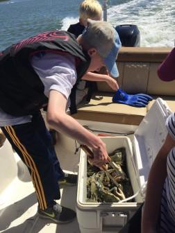 crabs 8 10-2